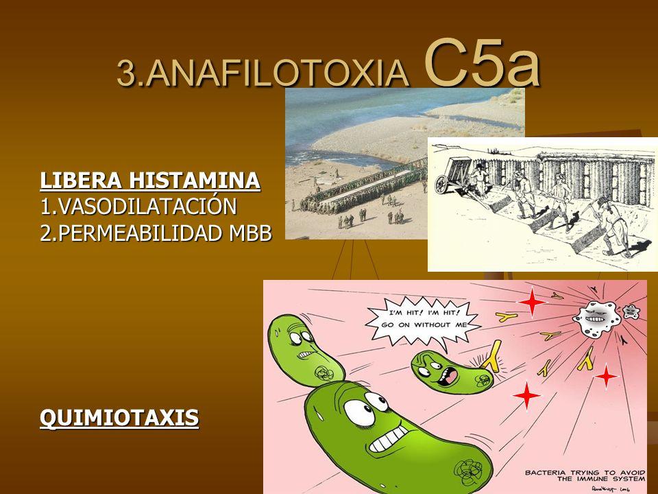 3.ANAFILOTOXIA C5a LIBERA HISTAMINA 1.VASODILATACIÓN
