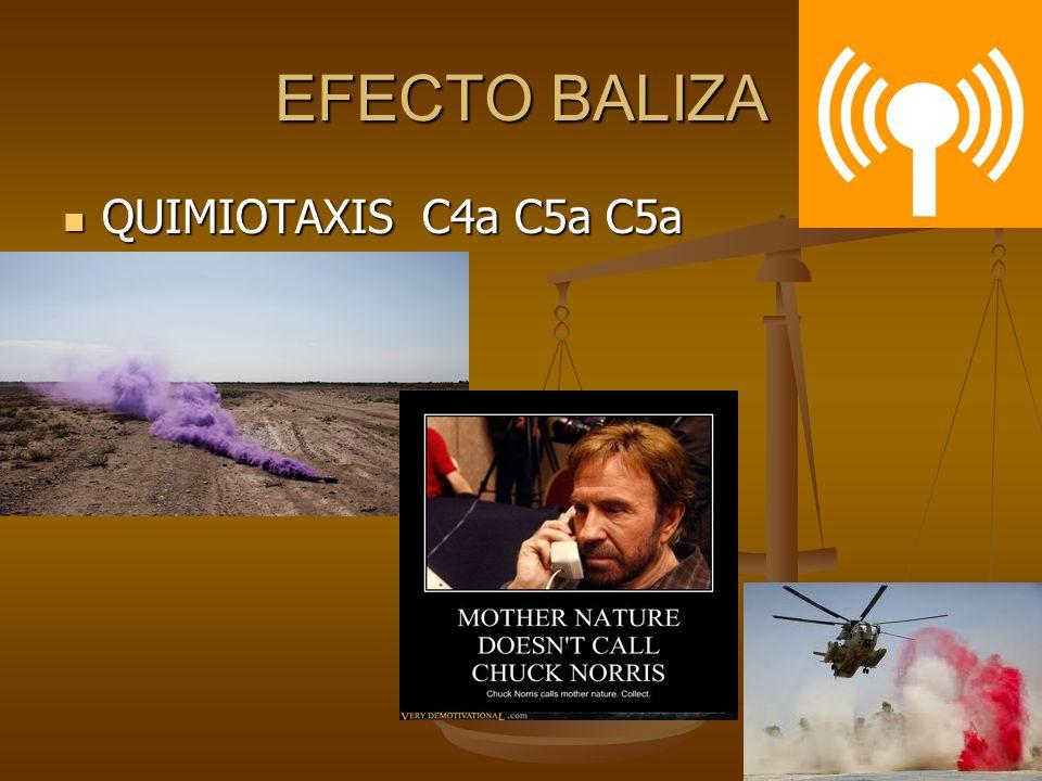 EFECTO BALIZA QUIMIOTAXIS C4a C5a C5a