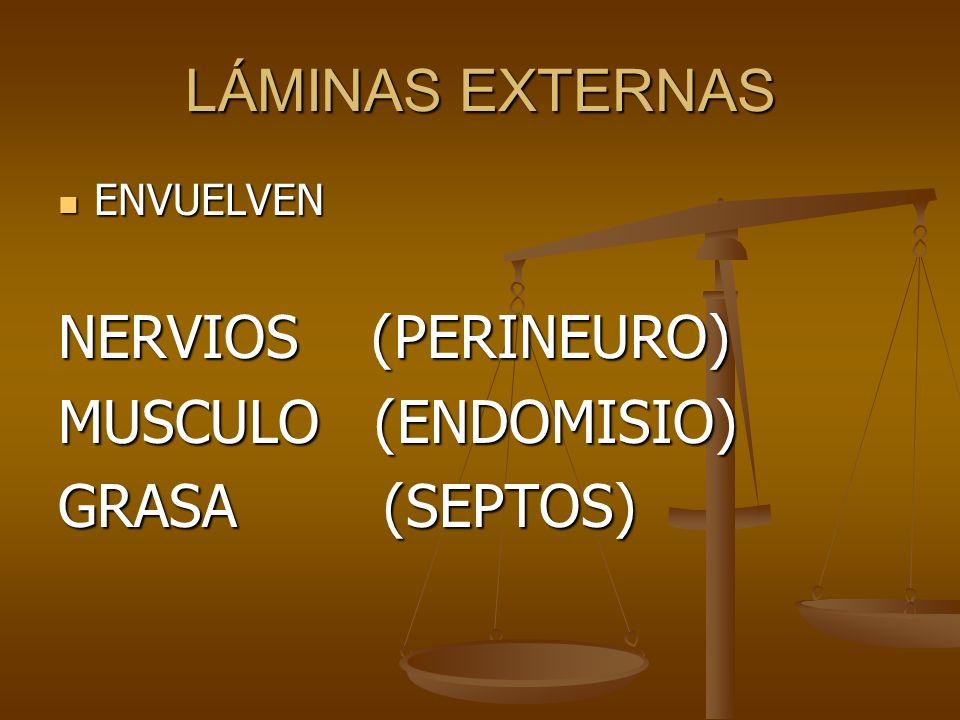 LÁMINAS EXTERNAS NERVIOS (PERINEURO) MUSCULO (ENDOMISIO)