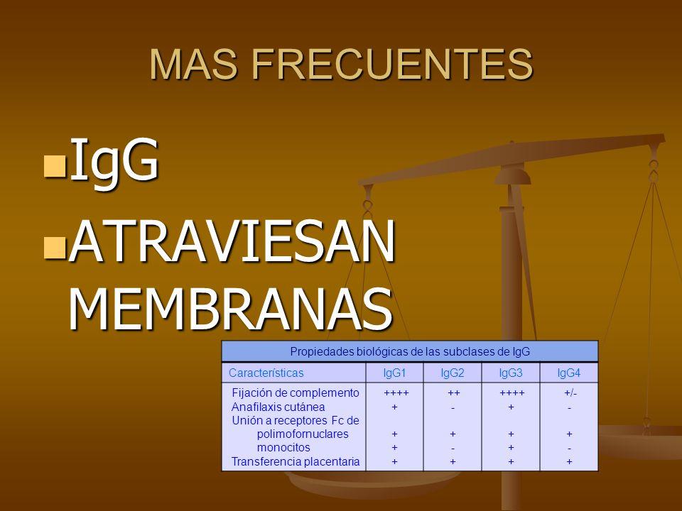 Propiedades biológicas de las subclases de IgG
