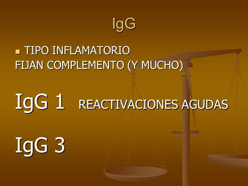 IgG 1 REACTIVACIONES AGUDAS IgG 3