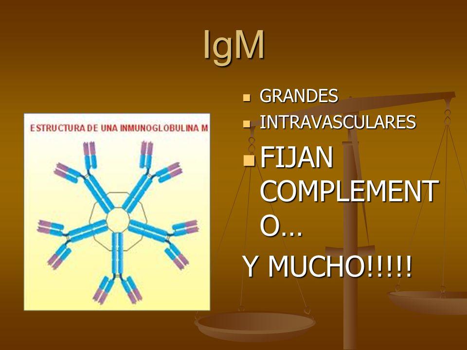 IgM GRANDES INTRAVASCULARES FIJAN COMPLEMENTO… Y MUCHO!!!!!