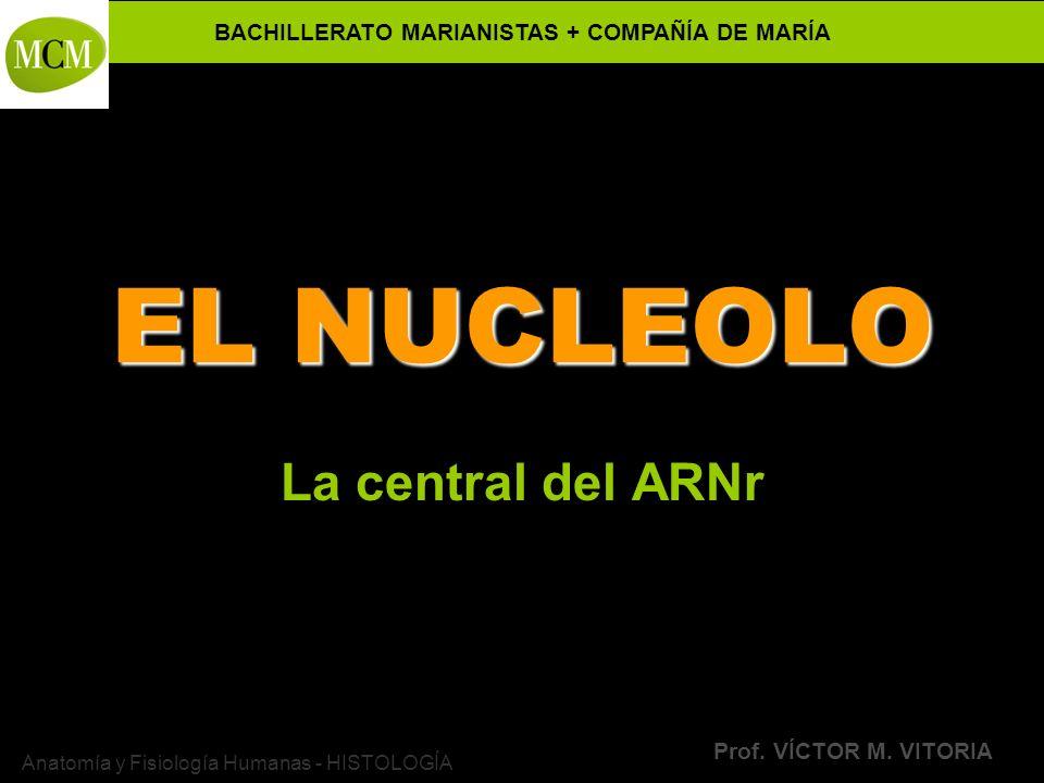 VÍCTOR M. VITORIA es PROFESOR JANO La central del ARNr
