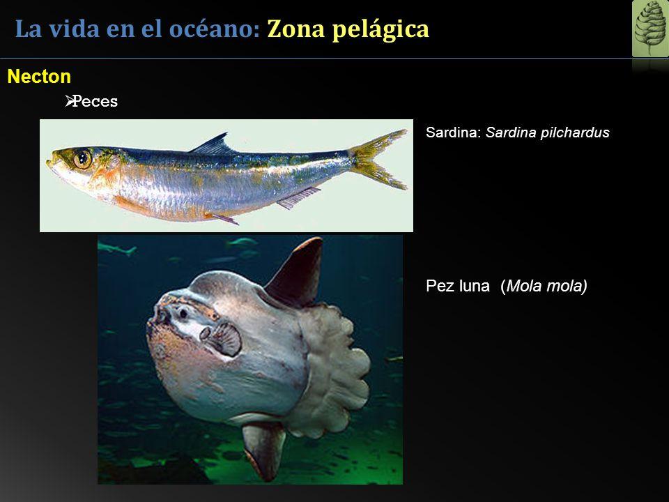 La vida en el océano: Zona pelágica