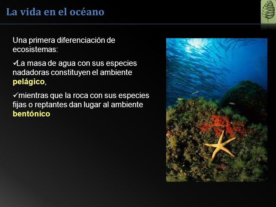 La vida en el océano Una primera diferenciación de ecosistemas: