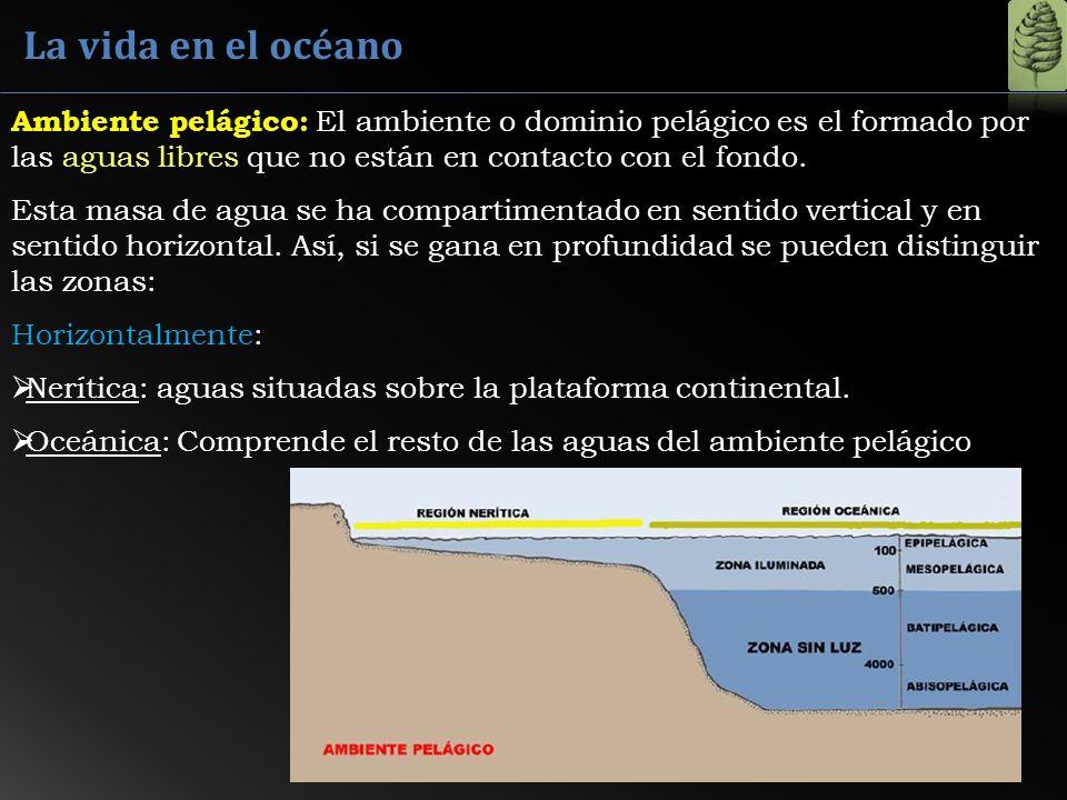 La vida en el océano Ambiente pelágico: El ambiente o dominio pelágico es el formado por las aguas libres que no están en contacto con el fondo.