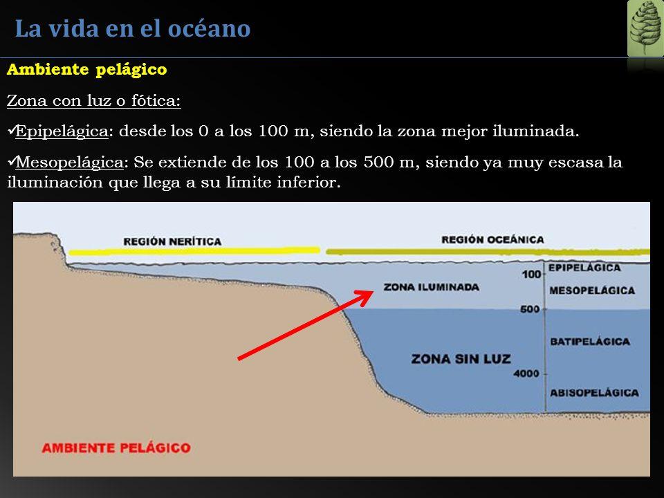 La vida en el océano Ambiente pelágico Zona con luz o fótica: