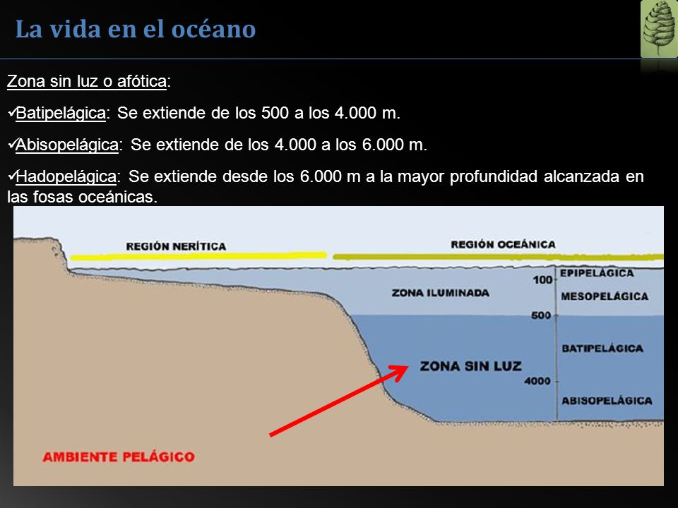 La vida en el océano Zona sin luz o afótica: