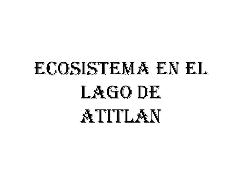 Ecosistema en el Lago de Atitlan