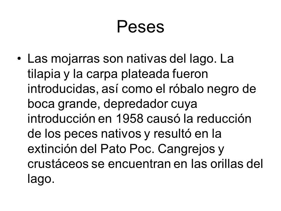 Peses