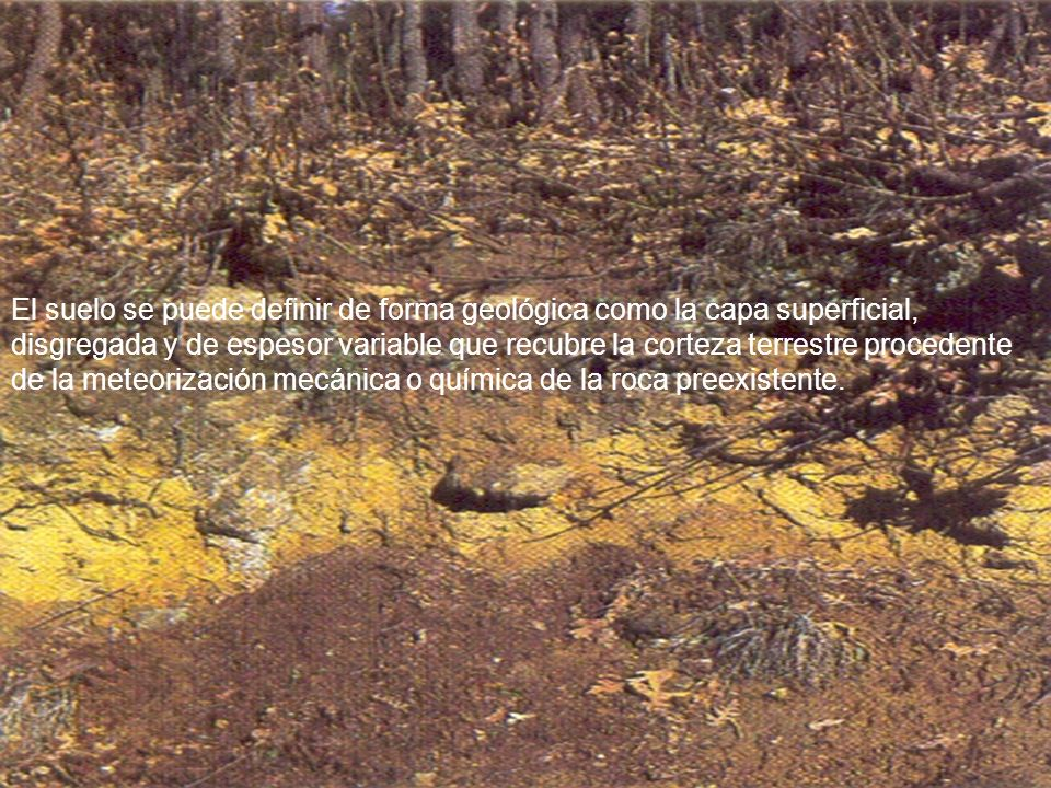 El suelo se puede definir de forma geológica como la capa superficial, disgregada y de espesor variable que recubre la corteza terrestre procedente de la meteorización mecánica o química de la roca preexistente.