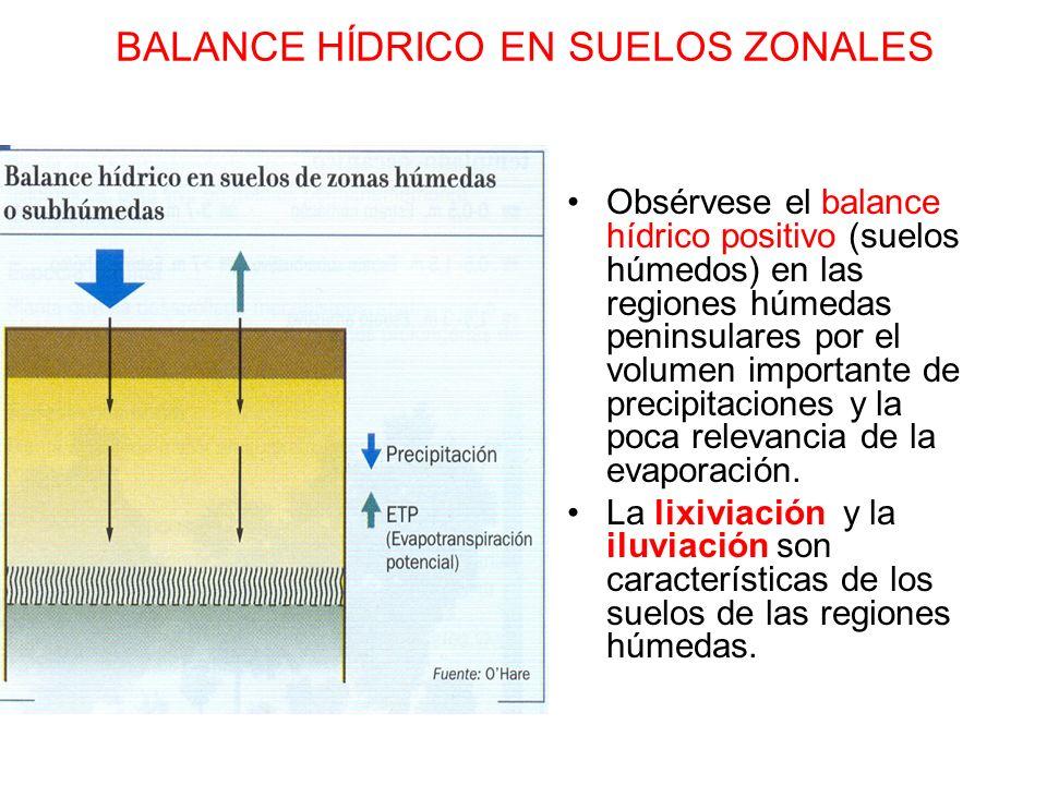 BALANCE HÍDRICO EN SUELOS ZONALES