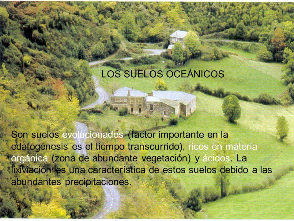 LOS SUELOS OCEÁNICOS