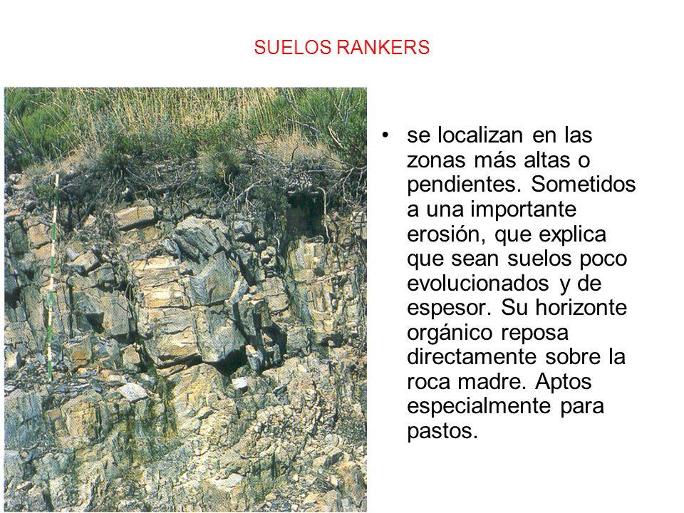 SUELOS RANKERS