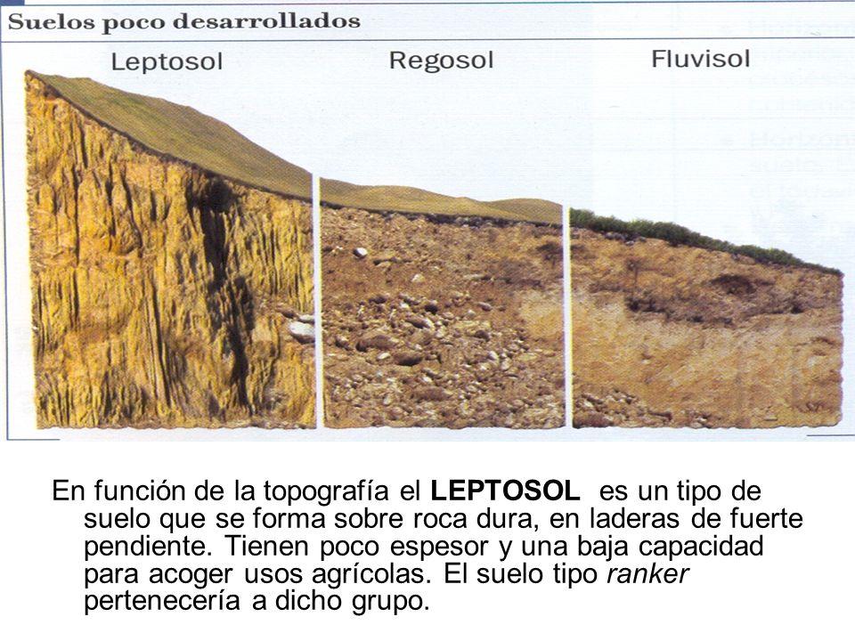 En función de la topografía el LEPTOSOL es un tipo de suelo que se forma sobre roca dura, en laderas de fuerte pendiente.