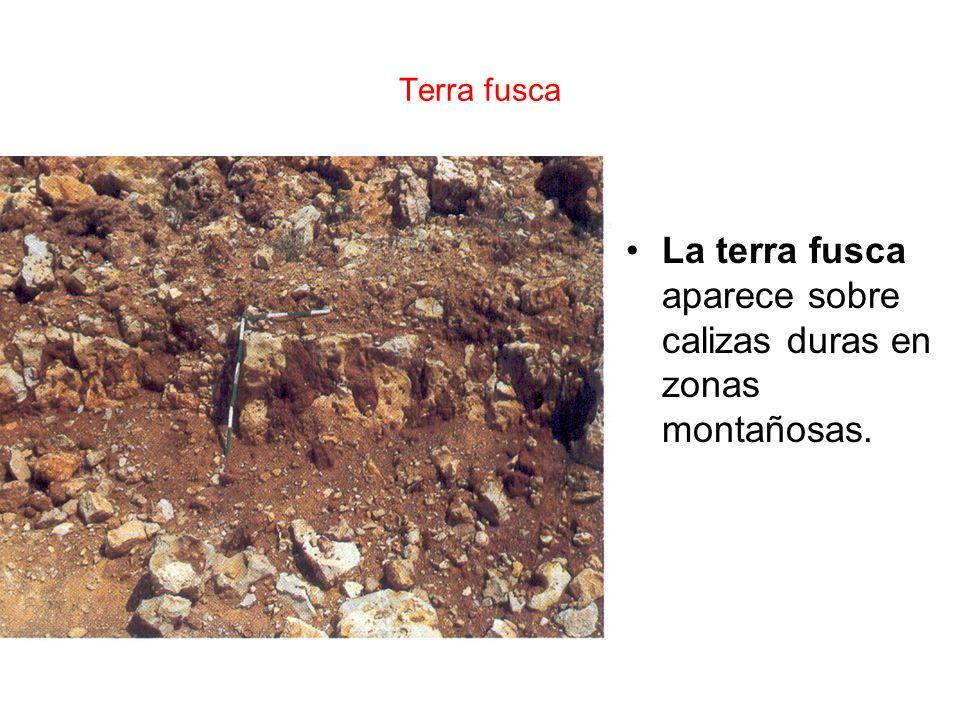 La terra fusca aparece sobre calizas duras en zonas montañosas.