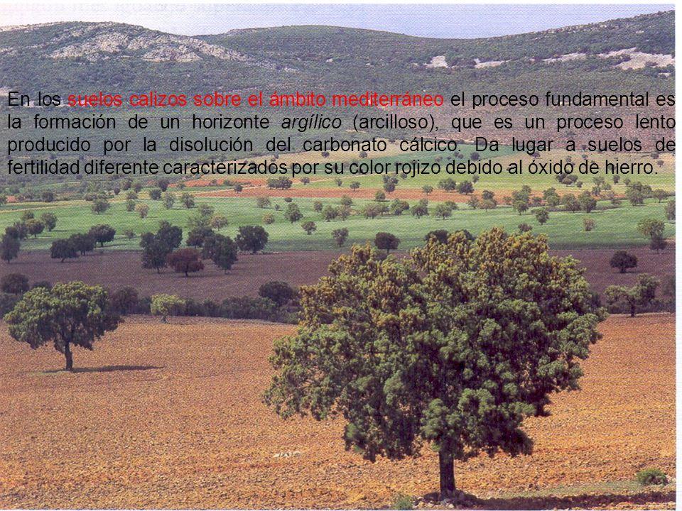 En los suelos calizos sobre el ámbito mediterráneo el proceso fundamental es la formación de un horizonte argílico (arcilloso), que es un proceso lento producido por la disolución del carbonato cálcico.