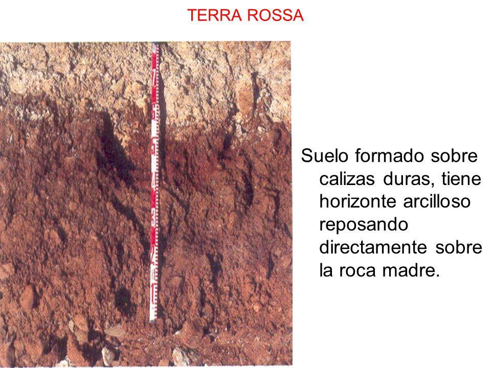 TERRA ROSSASuelo formado sobre calizas duras, tiene horizonte arcilloso reposando directamente sobre la roca madre.