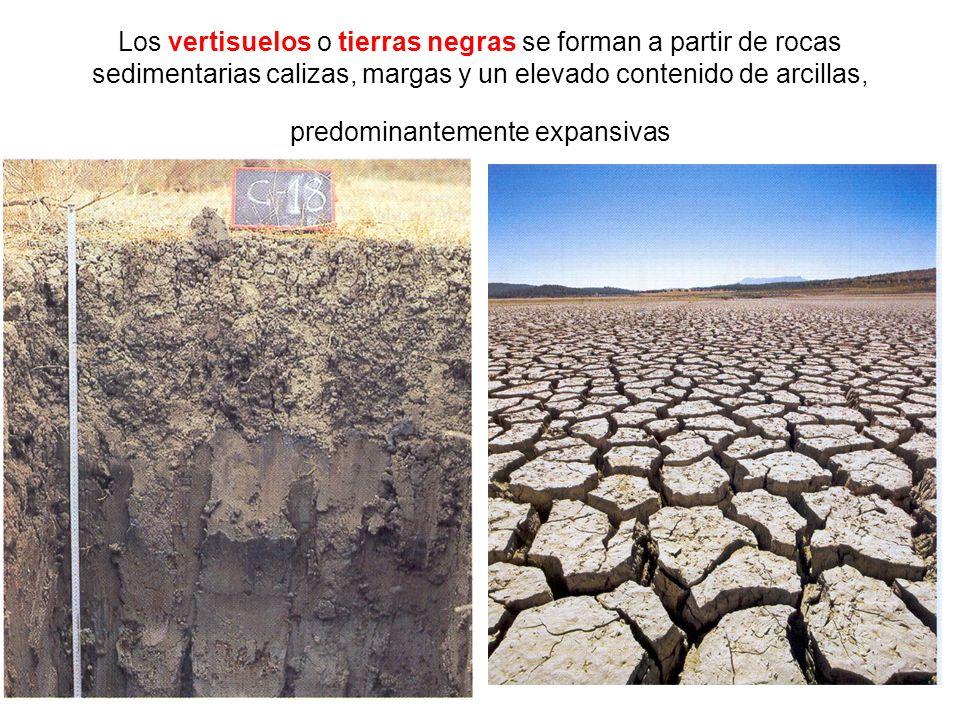 Los vertisuelos o tierras negras se forman a partir de rocas sedimentarias calizas, margas y un elevado contenido de arcillas, predominantemente expansivas