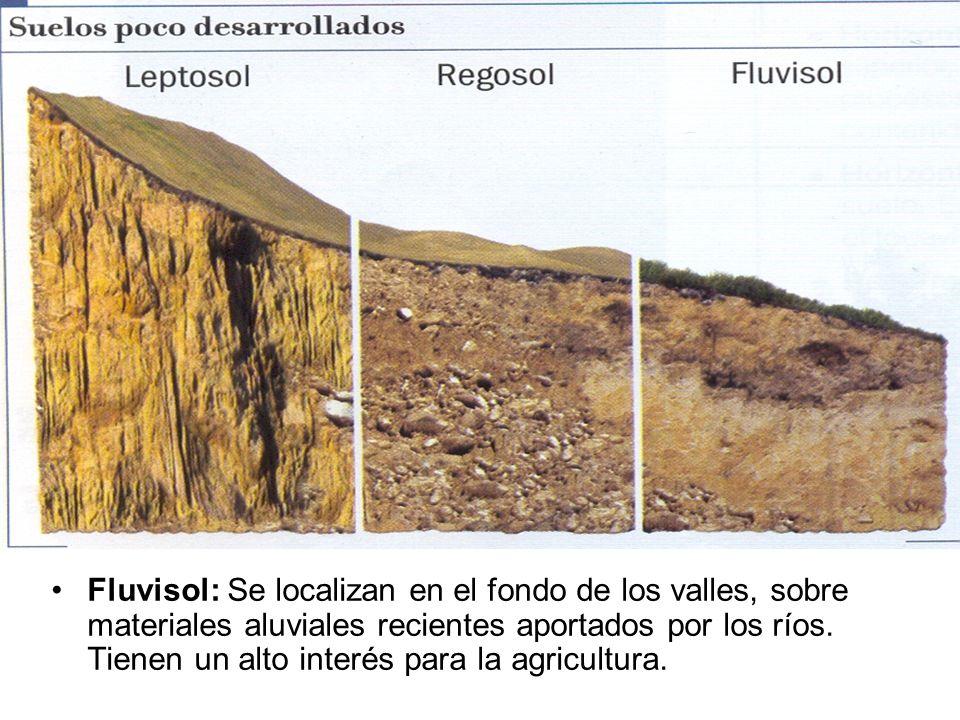 Fluvisol: Se localizan en el fondo de los valles, sobre materiales aluviales recientes aportados por los ríos.