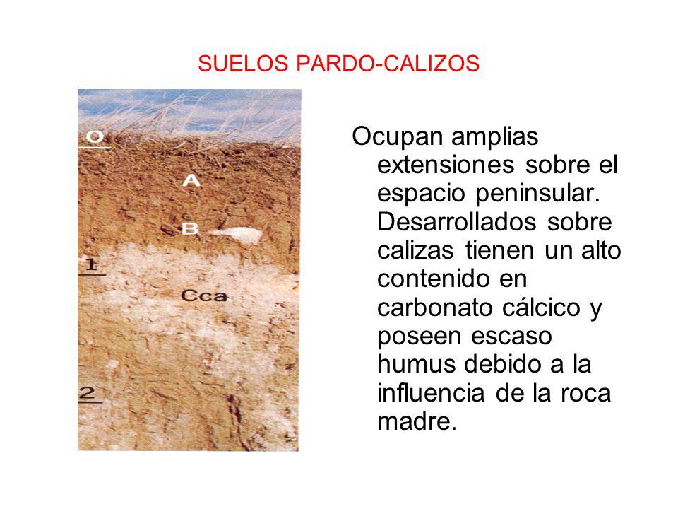 SUELOS PARDO-CALIZOS