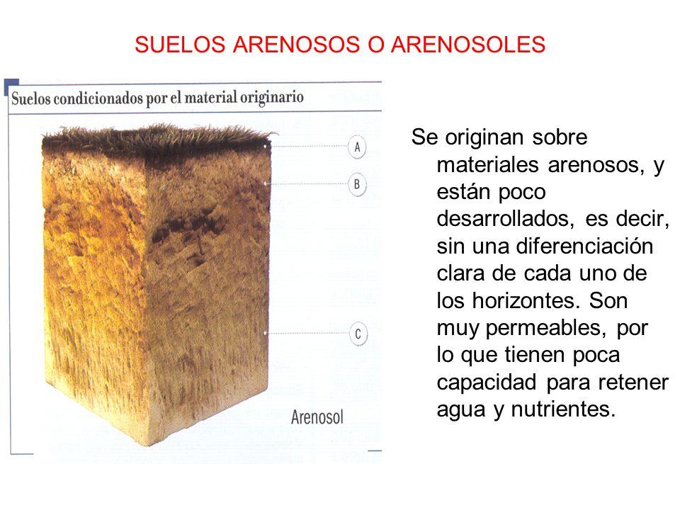 SUELOS ARENOSOS O ARENOSOLES
