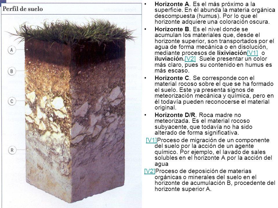 El suelo se puede definir de forma geol gica como la capa for El suelo y sus capas