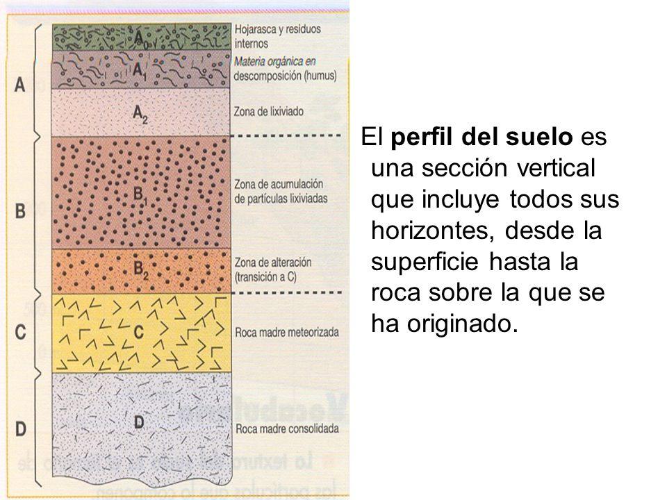 El perfil del suelo es una sección vertical que incluye todos sus horizontes, desde la superficie hasta la roca sobre la que se ha originado.