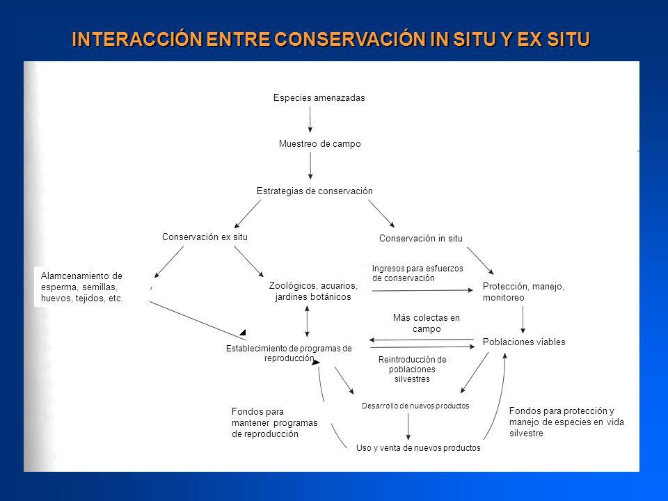INTERACCIÓN ENTRE CONSERVACIÓN IN SITU Y EX SITU