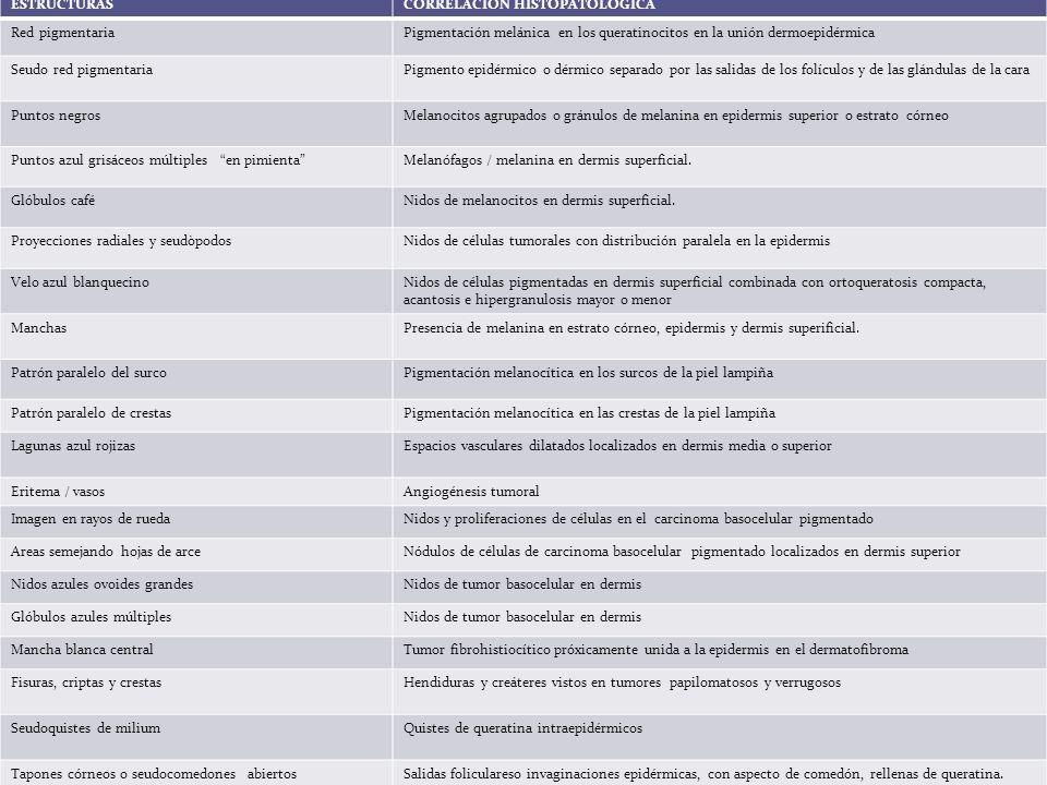ESTRUCTURAS CORRELACIÓN HISTOPATOLÓGICA. Red pigmentaria. Pigmentación melánica en los queratinocitos en la unión dermoepidérmica.