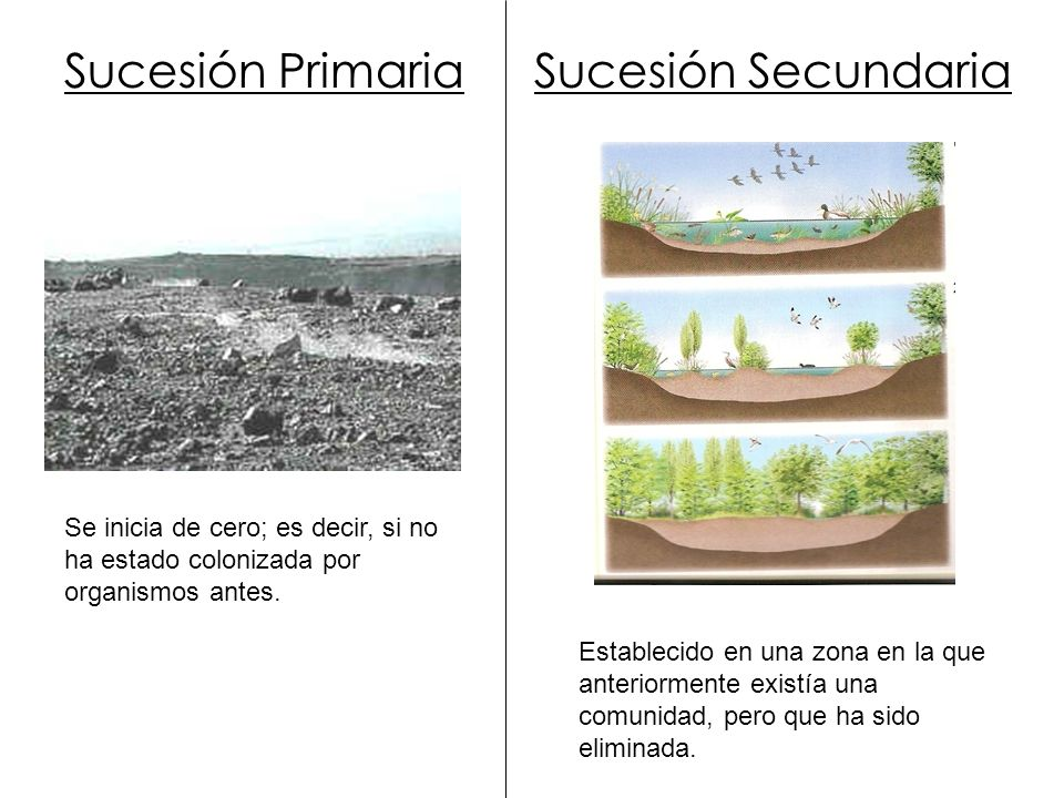 Sucesión Primaria Sucesión Secundaria