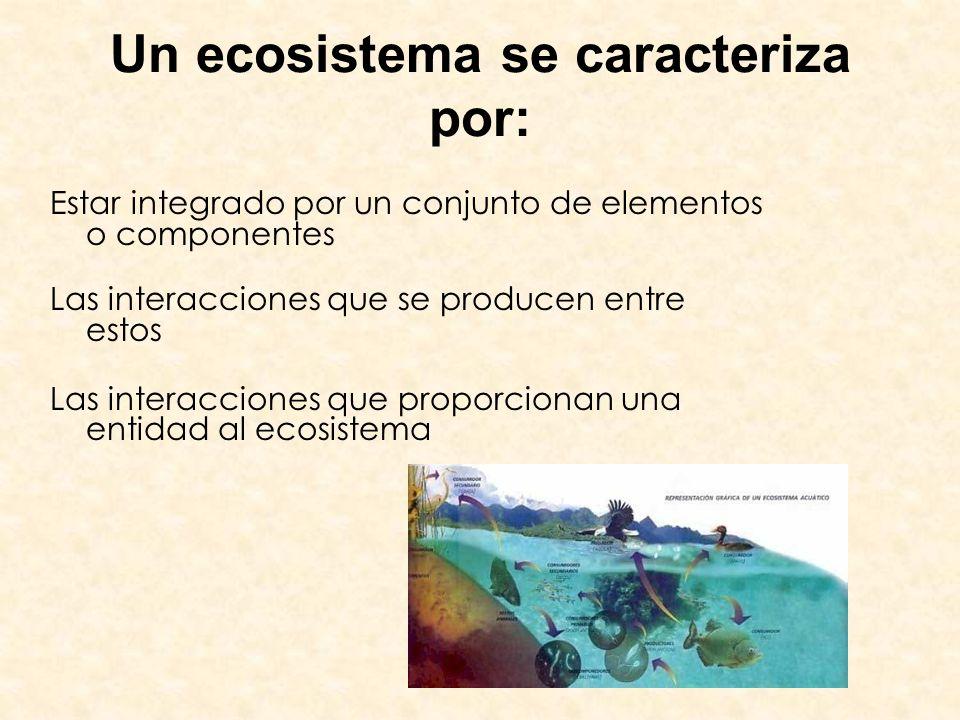 Un ecosistema se caracteriza por: