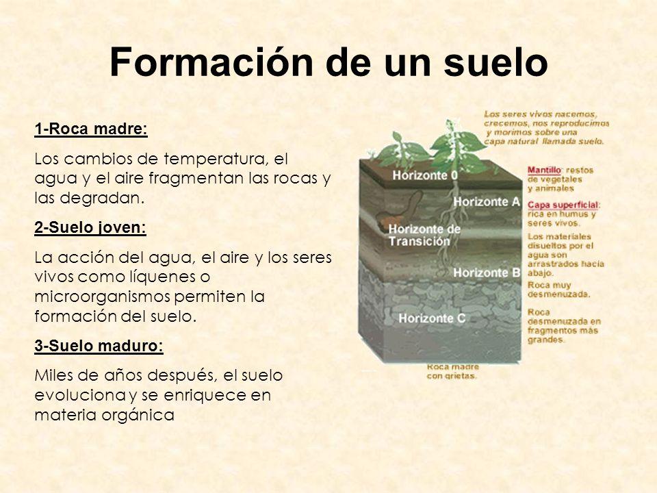 Formación de un suelo 1-Roca madre: