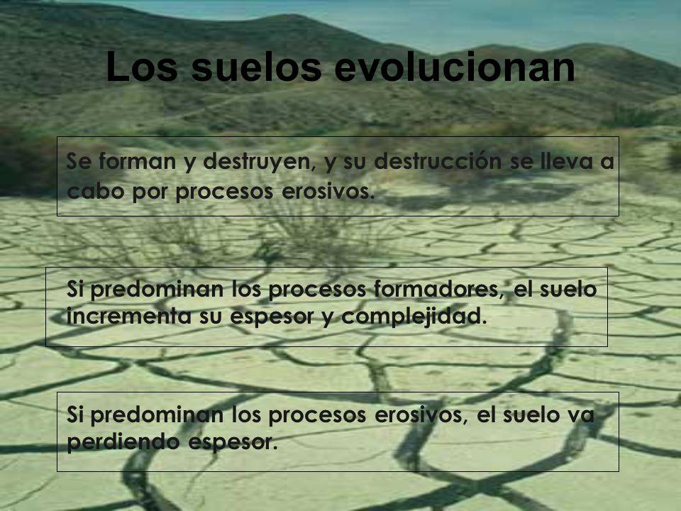 Los suelos evolucionan