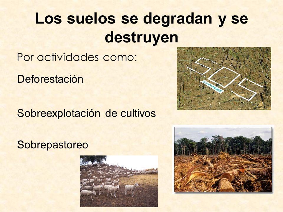 Los suelos se degradan y se destruyen
