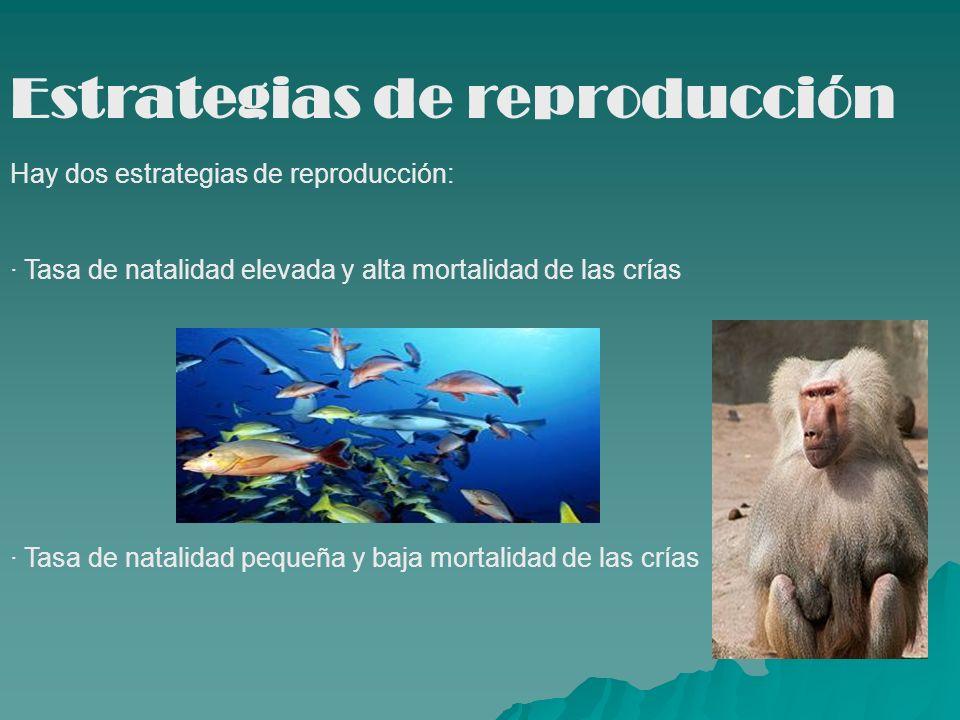 Estrategias de reproducción
