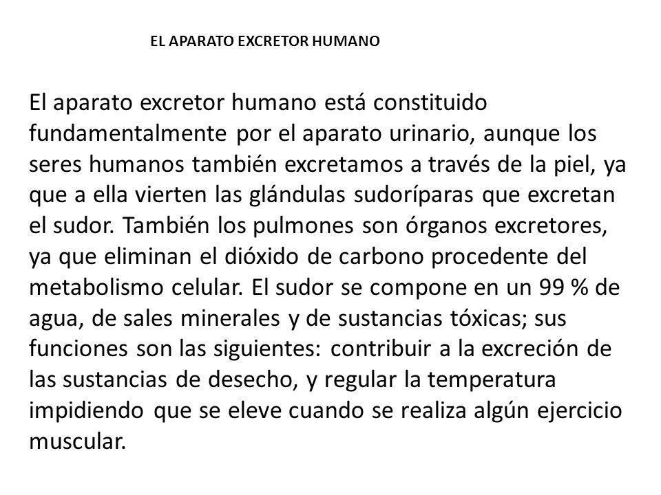 EL APARATO EXCRETOR HUMANO
