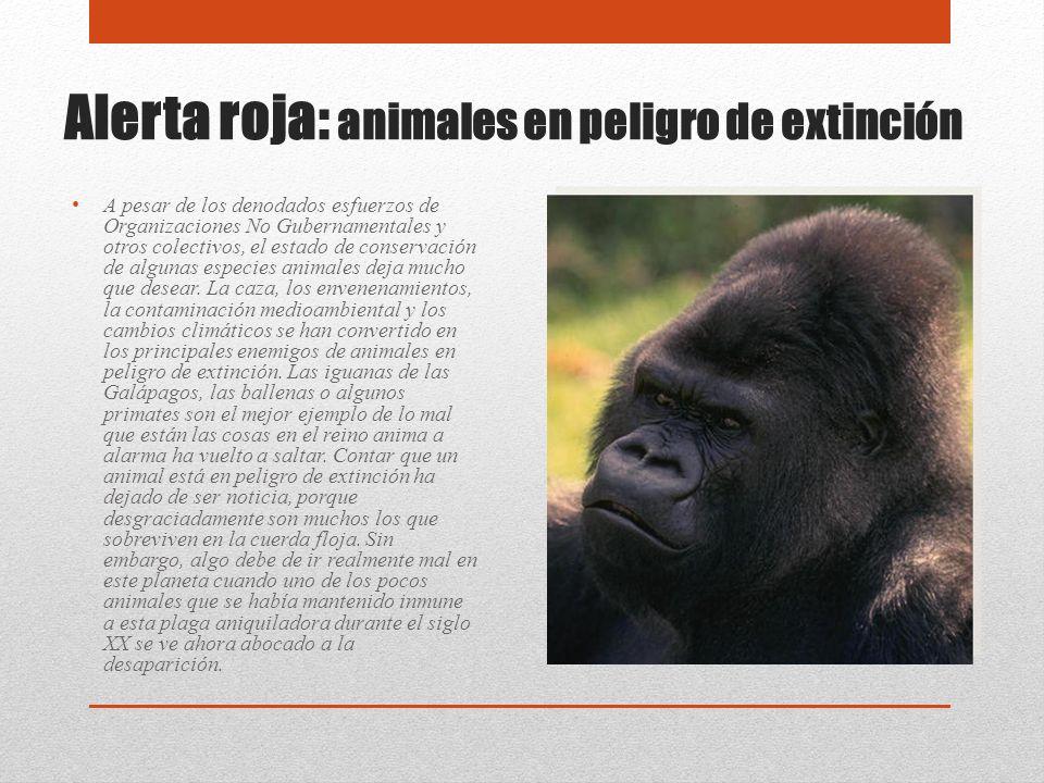 Alerta roja: animales en peligro de extinción