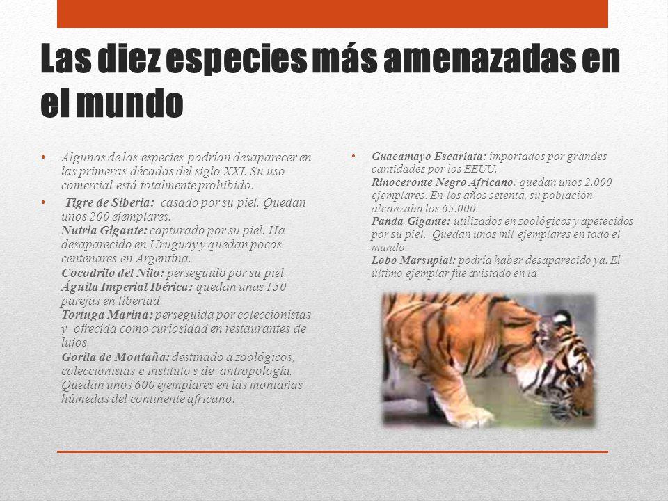 Las diez especies más amenazadas en el mundo