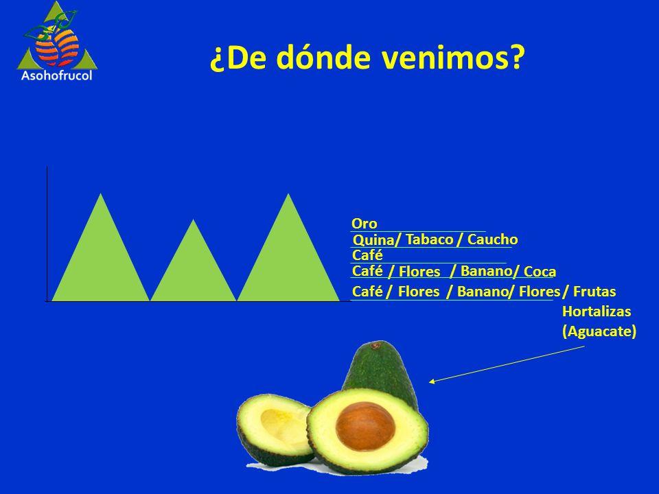 ¿De dónde venimos Oro Quina / Tabaco / Caucho Café Café / Flores