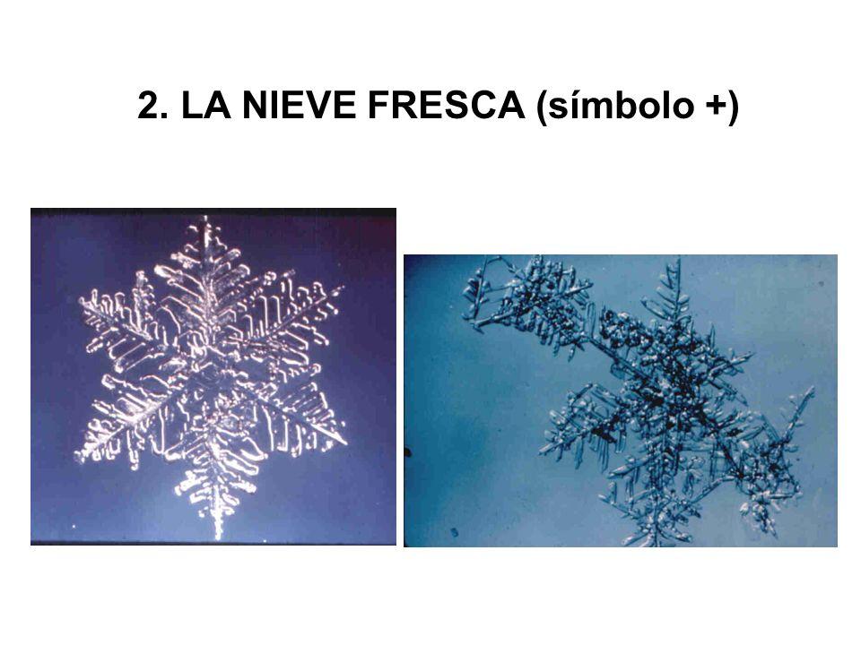 2. LA NIEVE FRESCA (símbolo +)