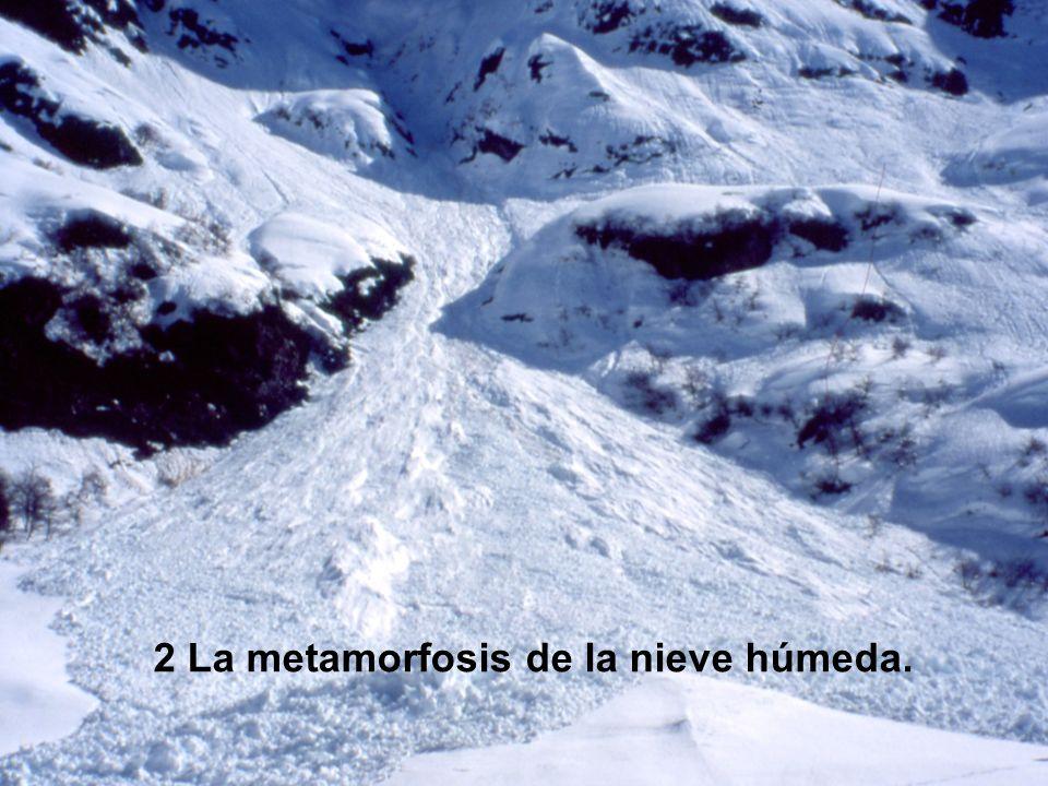 2 La metamorfosis de la nieve húmeda.