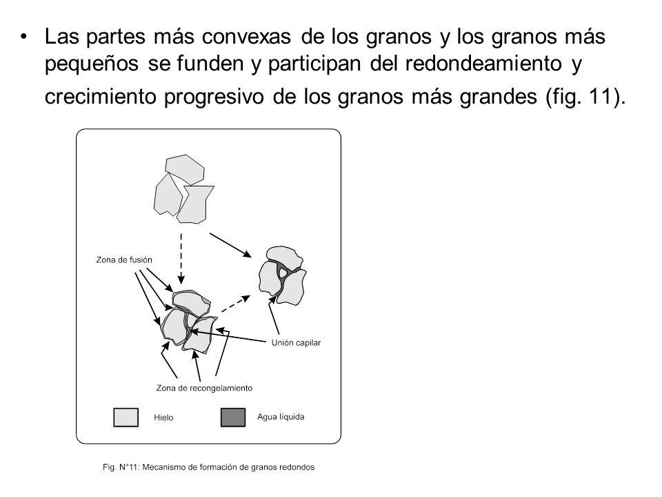 Las partes más convexas de los granos y los granos más pequeños se funden y participan del redondeamiento y crecimiento progresivo de los granos más grandes (fig.