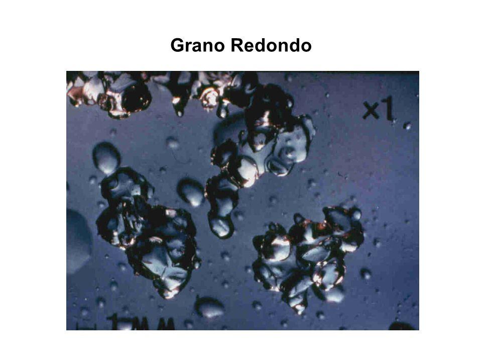 Grano Redondo