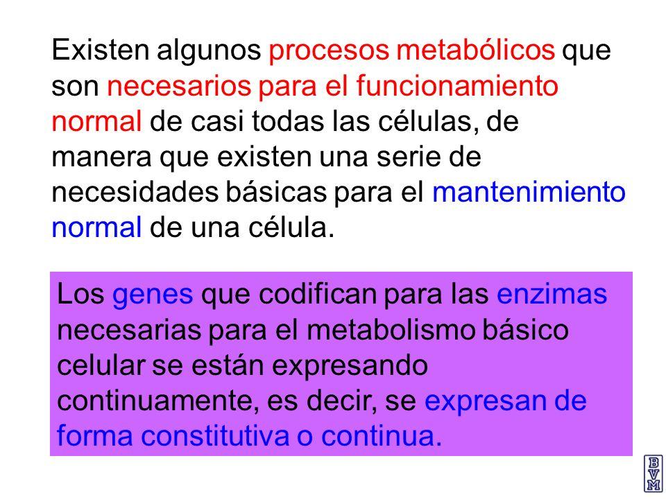 Existen algunos procesos metabólicos que son necesarios para el funcionamiento normal de casi todas las células, de manera que existen una serie de necesidades básicas para el mantenimiento normal de una célula.