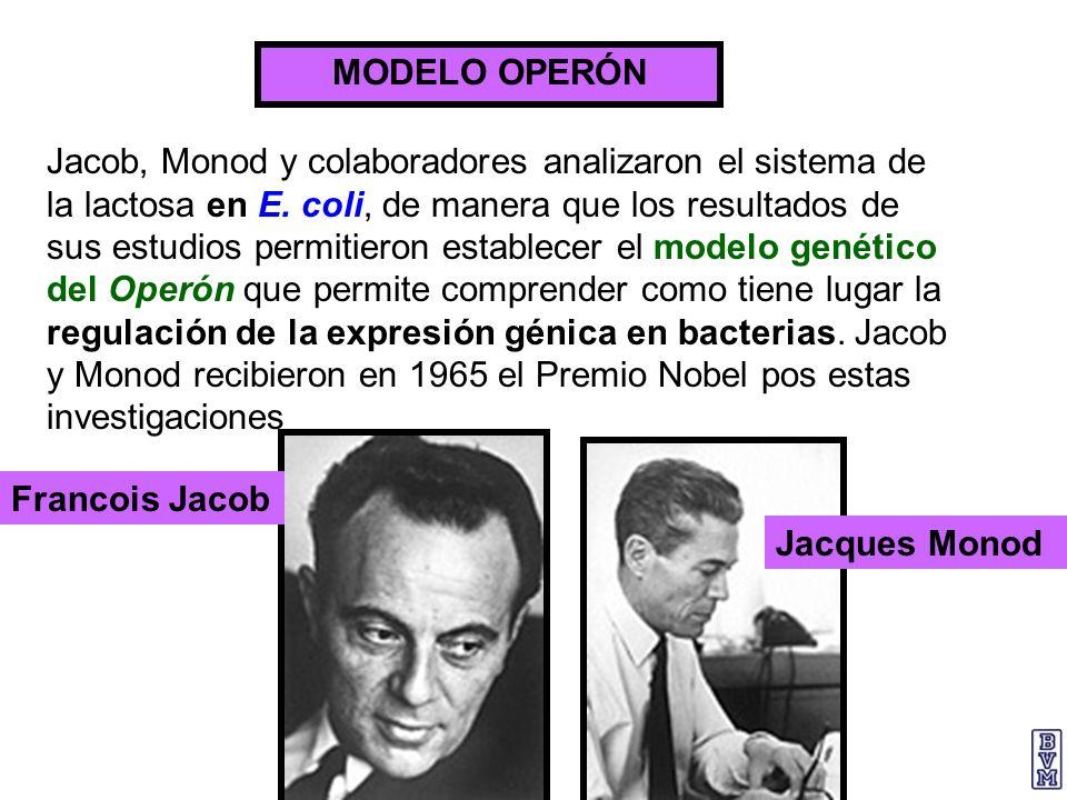 MODELO OPERÓN