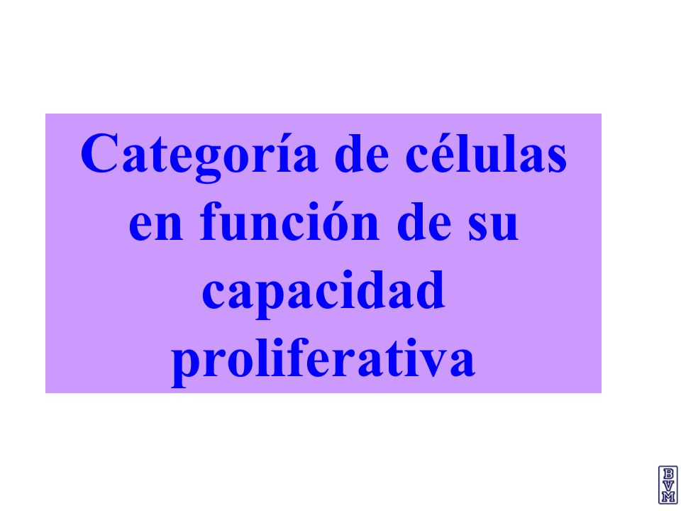 Categoría de células en función de su capacidad proliferativa