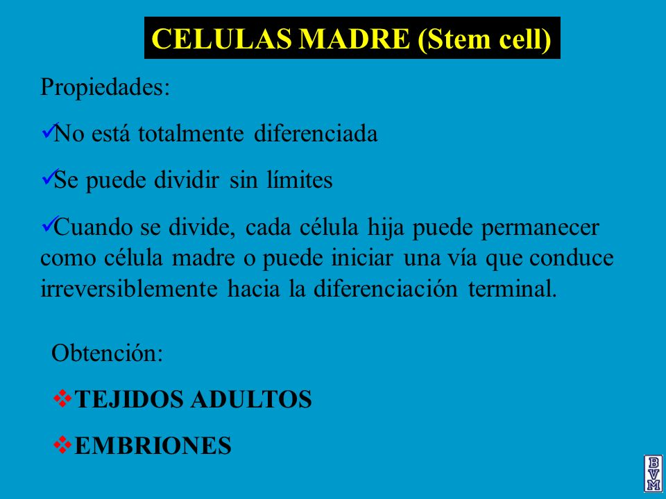 CELULAS MADRE (Stem cell)