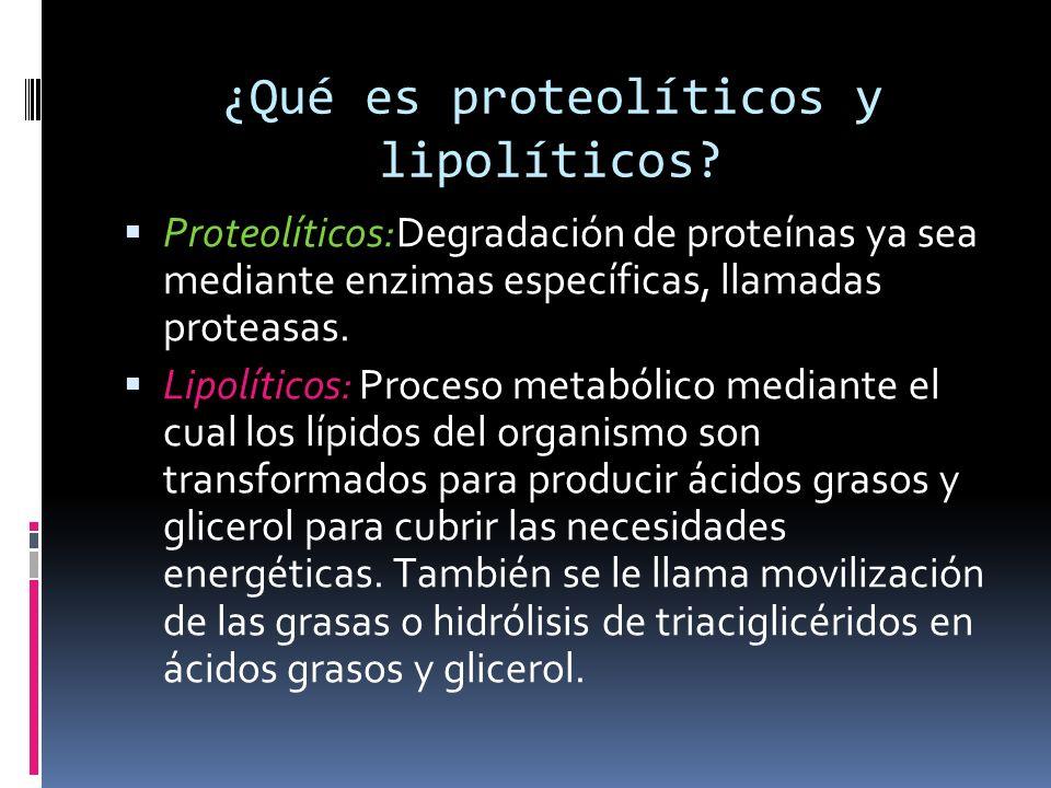 ¿Qué es proteolíticos y lipolíticos