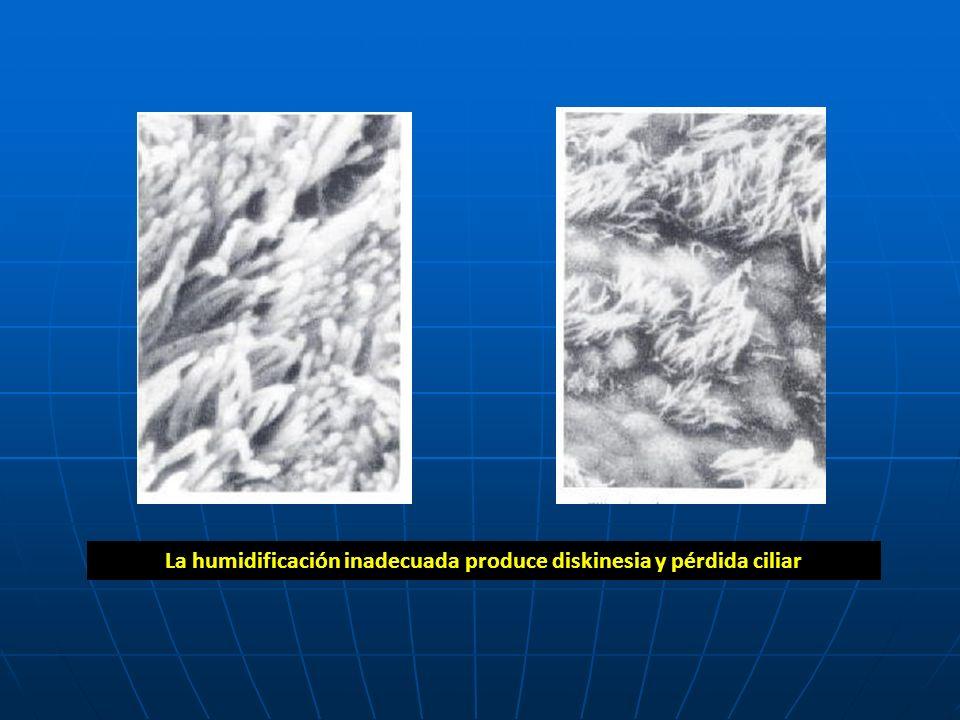 La humidificación inadecuada produce diskinesia y pérdida ciliar